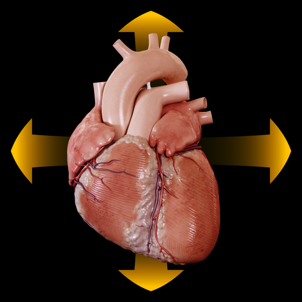 Heart - Spinning 3D Anatomy By Catfish Animation Studio S.r.l.